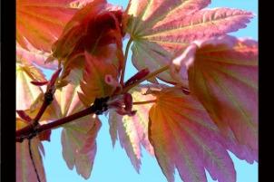 AutumnLvs