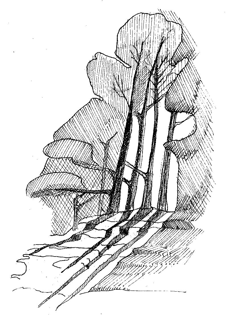 duneForestWEB