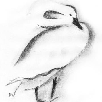 SwanWEB